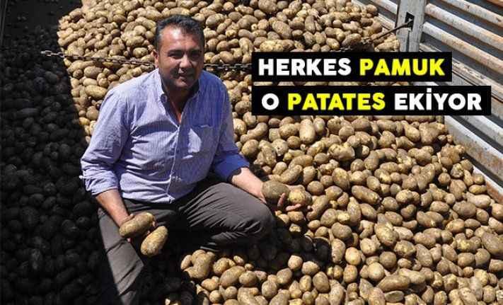 Herkes pamuk o patates ekiyor