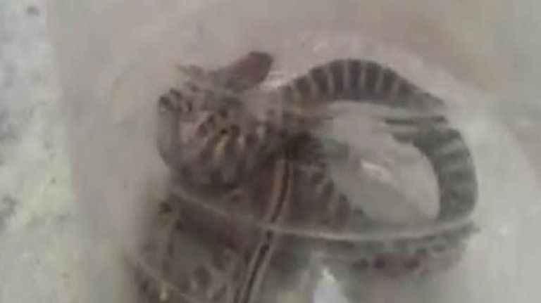Evin banyosundan 1 metrelik yılan çıktı