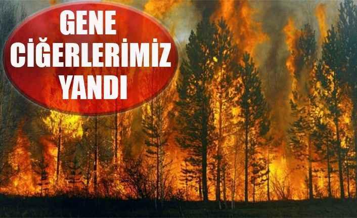Manavgatta orman yangını 1 hektar zarar gördü