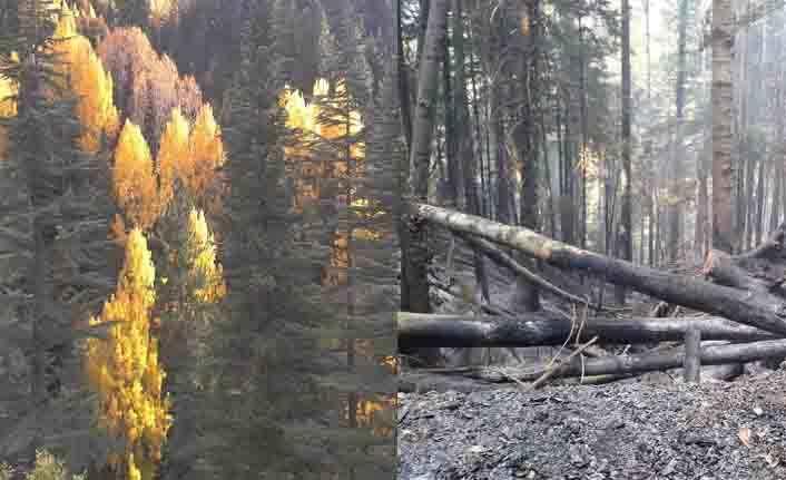 Alanya dikkat! Orman İşletme'den yangın uyarısı