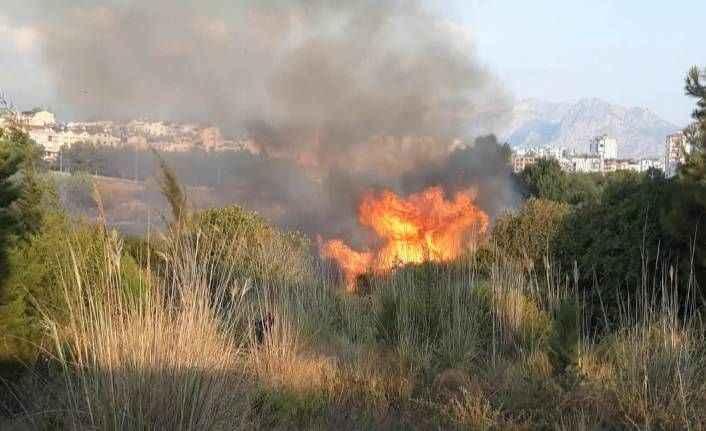 Sahile yakın alanda orman yangını