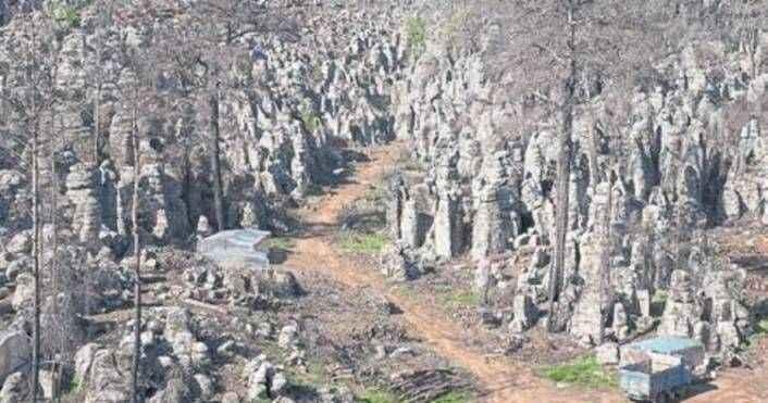 Antalya'da yanan ormanlar eskisinden gür