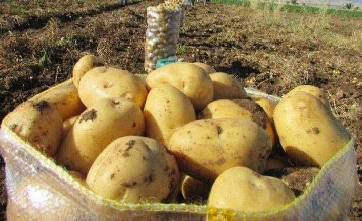 Hükümetten patates fiyatı için yeni adım