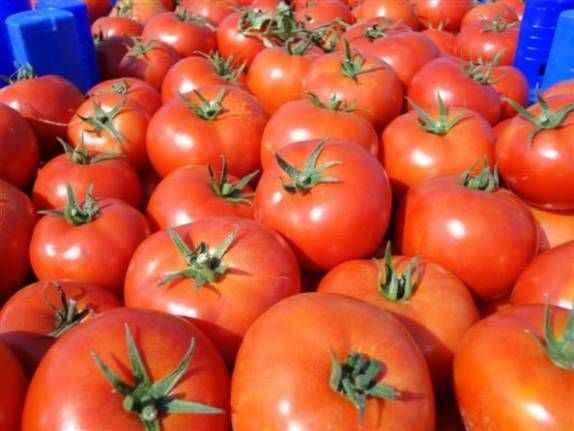 Rusya, Türkiye'den giden 60 ton domates ve çileği geri çevirdi