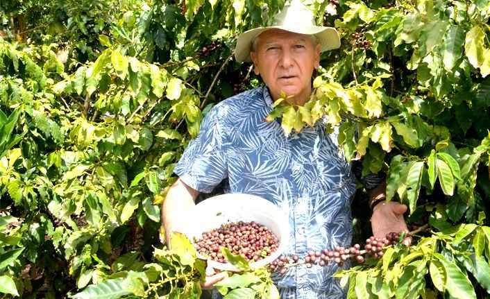 Türkiye'de bir ilk! Gazipaşa'da kahve meyvesi üretti