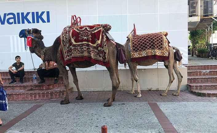 Alanya'da faytonlar kalktı, develer şehre indi