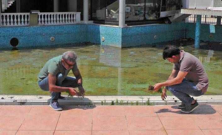 Antalya'da akıl almaz olay! Havuz başını kenevir tarlasına çevirdi