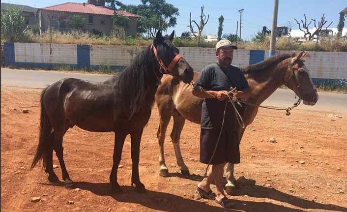 Alanya'da faytoncular atlarına veda etti! 8 at hayvanat bahçesine gönderildi
