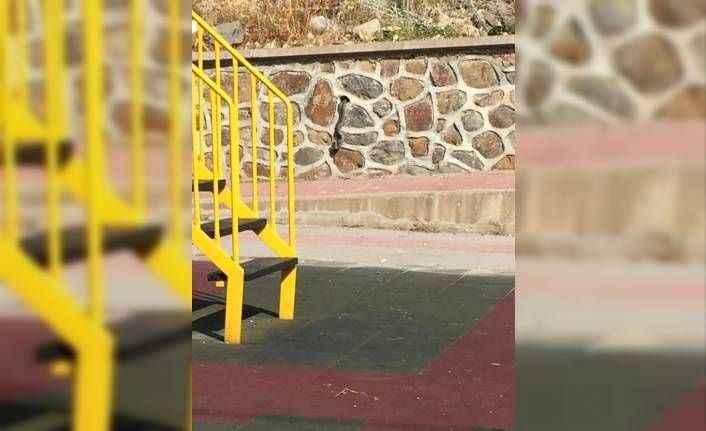 Çocuk parkında korku dolu anlar! Yılanlar duvardan çıktı