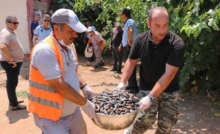 Antalya Büyükşehir Belediye Zabıtası halk sağlığını tehdit edenlere göz açtırmıyor