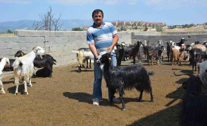 Kayıp keçi davasında hapis cezasını Yargıtay bozdu