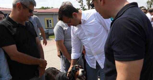 İBB Başkanı İmamoğlu'ndan sokak hayvanları talimatı