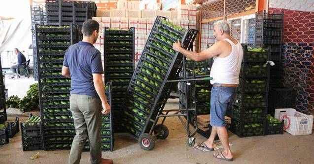 Alanya'dan Polonya'ya avokado ihracatı