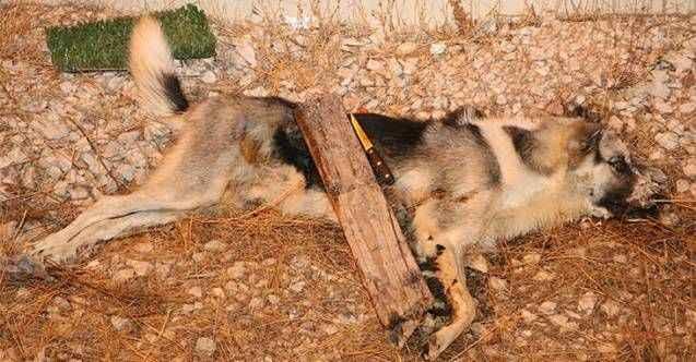 Antalya'da vahşet! İşkence edip öldürüldü