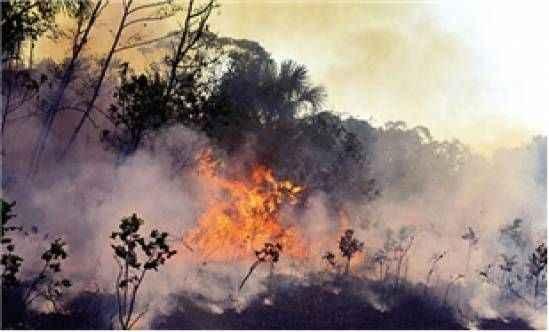 Amazonlar için koruma anlaşması