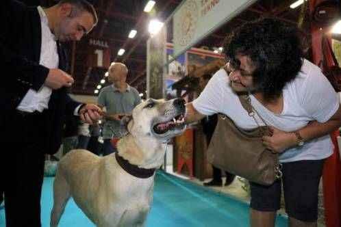 Tescilli Kangal köpeği 'Bozo' fuarın gözdesi