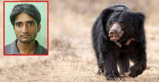 Cinsel organlarını yemek için ayı öldüren adamın savunması pes dedirtti