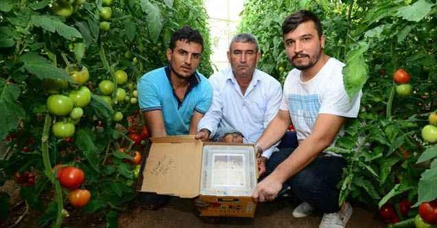 Antalyalı üreticiden Canan Karatay'a sert tepki