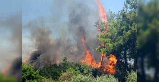 Alanya'da 4 hektar orman kül oldu
