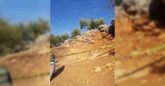 Antalya'da zeytin ağacından düşen kişi öldü
