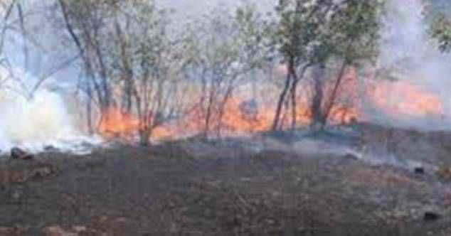 Alanya'da bir arazide çıkan yangında zeytin ve çam ağaçları yandı
