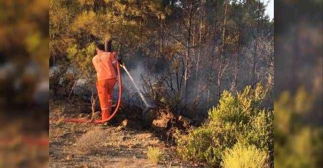 Manavgat'ta kopan elektrik teli yangın çıkardı