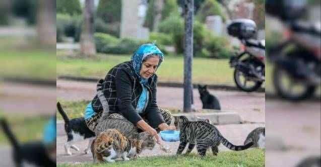 Hayvansever kadın parkta yaşayan 150 kediyi besliyor