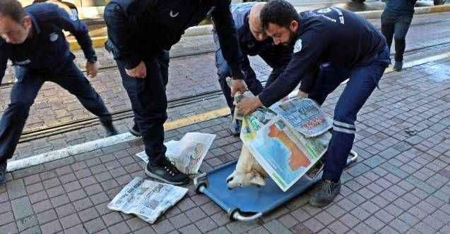 Antalya'da köpeğinin dükkanı önünde öldüğünü duyan esnaf, üzüntüden uzun süre dışarıya çıkamadı