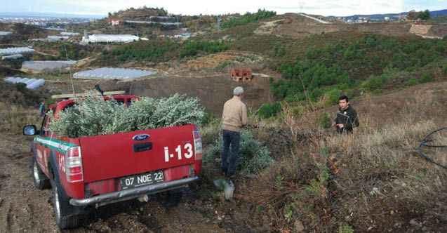 'Alanya'da devlet eliyle ağaç katliamı'