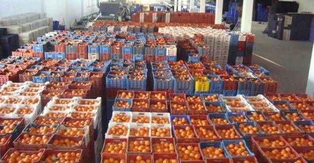 Akdeniz'in meyve ve sebze ihracatından ekonomiye dev katkı! Mersin başı çekti