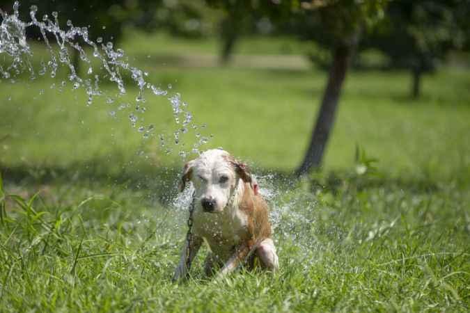 """Sıcaklık stresine giren hayvanlara """"sulu"""" çözüm"""