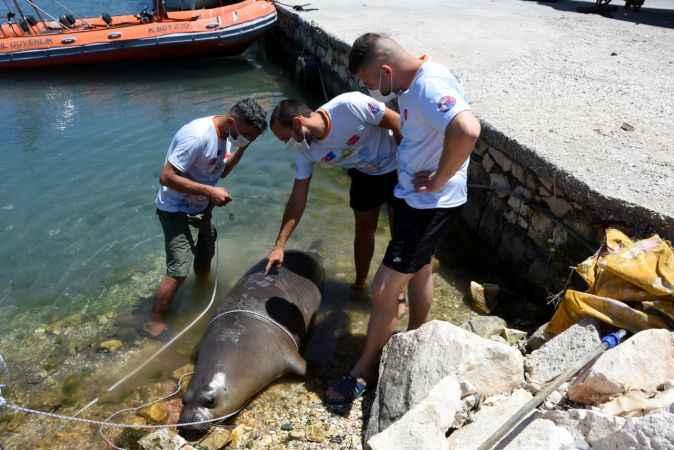 Antalya'da ölü Akdeniz foku kıyıya vurdu
