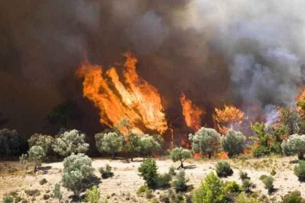 Ciğerlerimiz yandı! Bir haftada Alanya'da 3, Antalya'da 22 yangın...