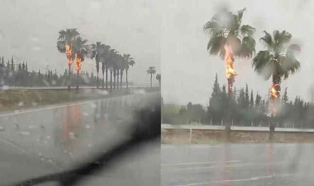 Antalya'da iki palmiye alev alev yandı!