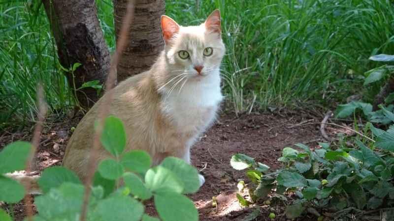 Sosyal medyada yer alan kediye şiddet haberleri yalan çıktı