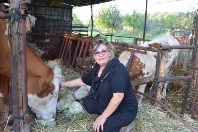 Hayatının aşkını Antalya tatilinde bulan İstanbullu gelin şimdi inek sağıyor