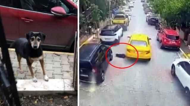 Vicdansız taksici köpeği ezip kaçtı!