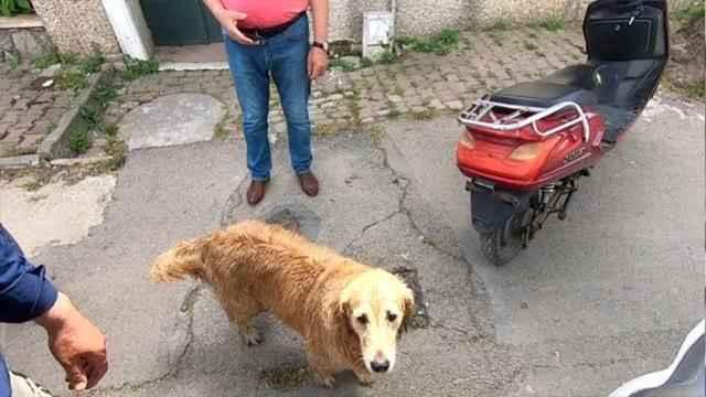 Görenler duygulandı! Sadık köpek hastaneye kaldırılan sahibini bir an olsun yalnız bırakmadı
