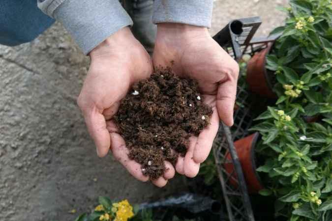 Süs bitkisi ve fide yetiştirenler dikkat!