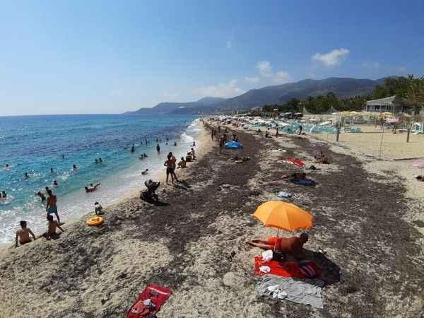 Alanya Kleopatra Plajı'nı yosunlar sardı