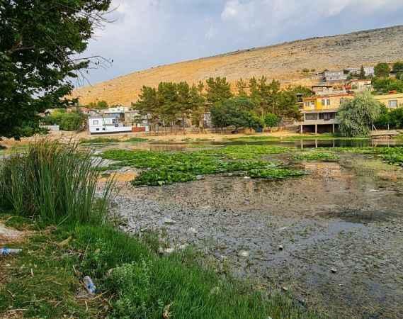 Nilüfer çiçeği ve Nilüfer Gölü yok olmakla karşı karşıya