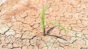 Alanya tarımı kuraklığın pençesinde