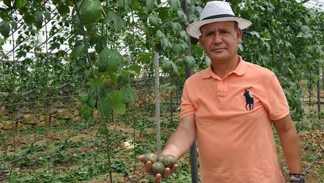 Passiflora için Almanya'dan Alanya'ya döndü! İlk hasadının kilosunu 75 liradan satıyor