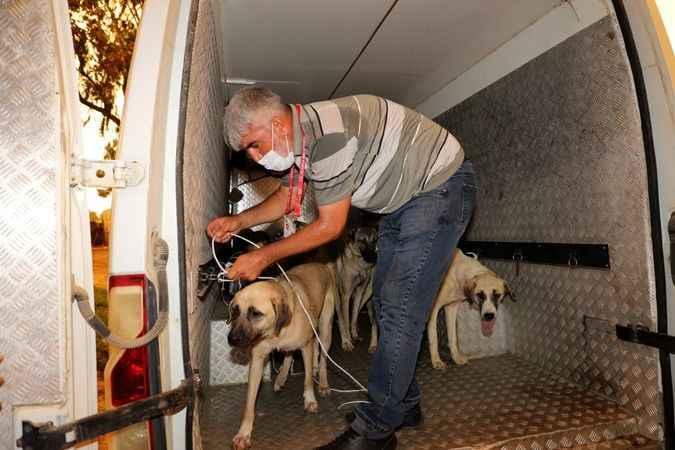 Ekipler 11 köpeği Alanya'ya getirdi.