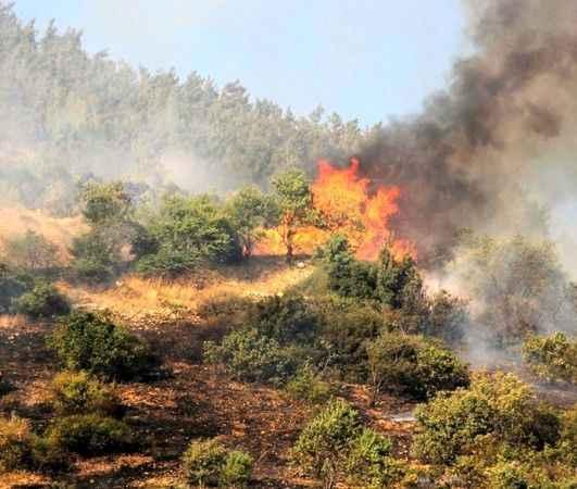 Akdeniz'de yangınlar devam ediyor! Kahramanmaraşta'da ciğerlerimiz yandı