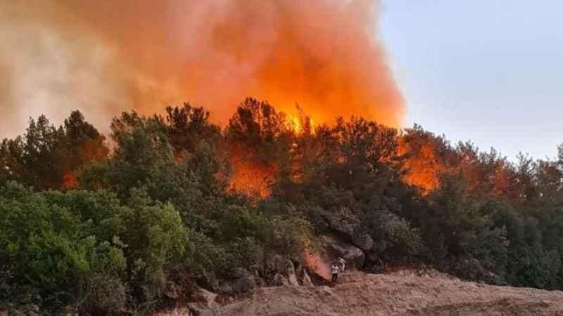 Alanya Yeniköy'de orman yangını