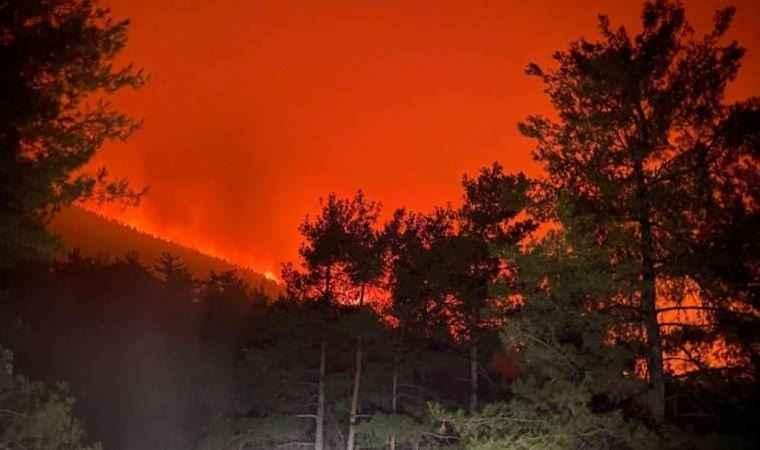 Uzmanlardan yanan alanlara dikilecek yeni fidanlar hakkında kritik uyarı!