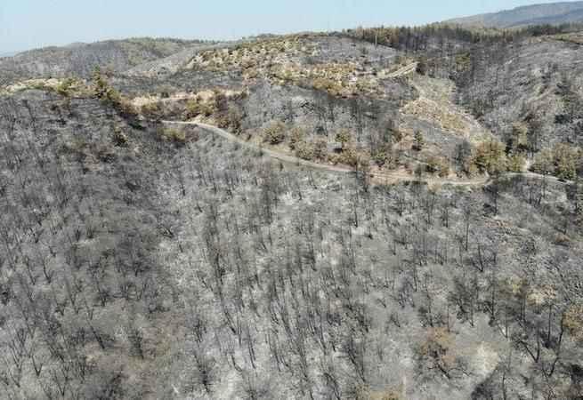 """Yangın bölgelerinde """"Pes"""" dedirten fırsatçılık! Yanan tarlaları satışa çıkardılar"""