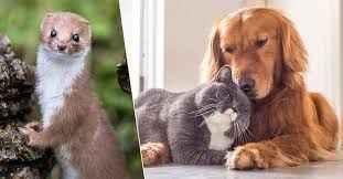 Kedi ve köpeklere mikroçip zorunluluğu