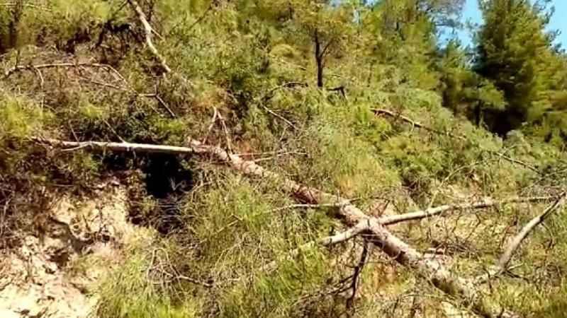 İnanılmaz olay! Yangın bahanesiyle işçilere ağaçları kestirdiler